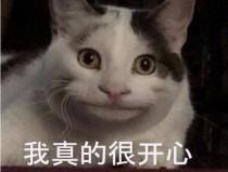 zblog后台文章总数跟作者对不上怎么回事