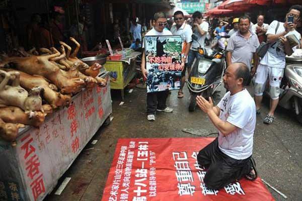 玉林荔枝狗肉节:是美味还是罪恶?
